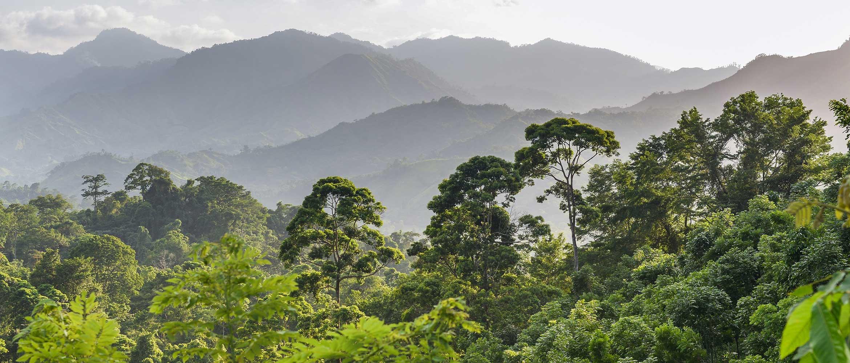 Floresta em Honduras