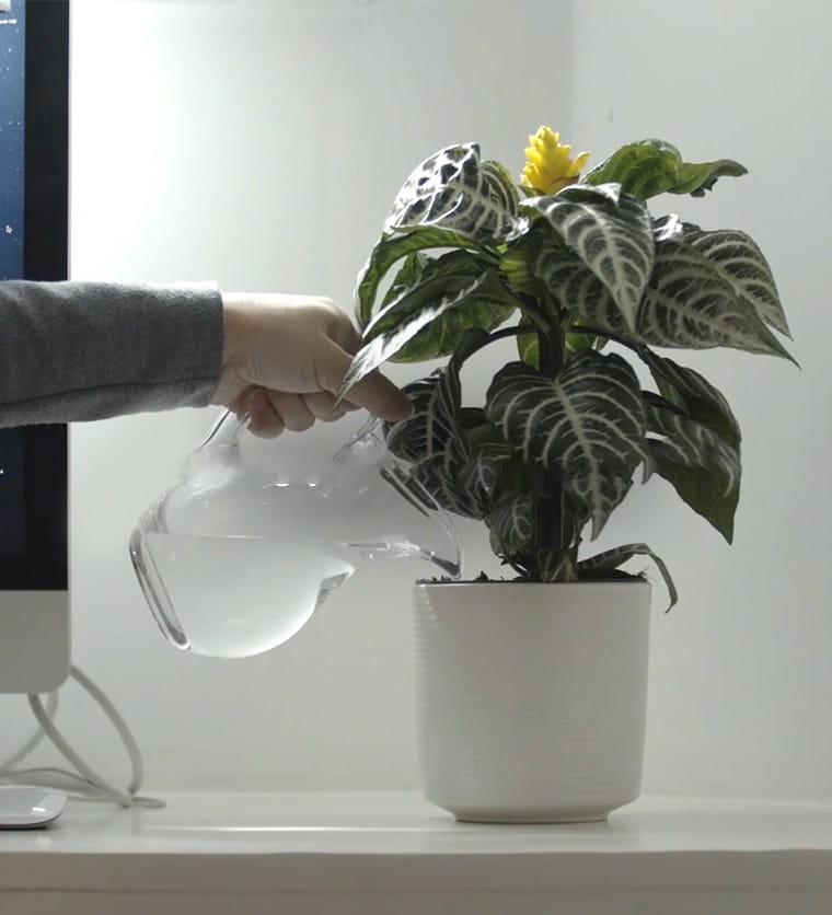 Regar uma planta